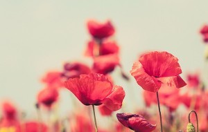 English words and phrases connected to Armistice Day