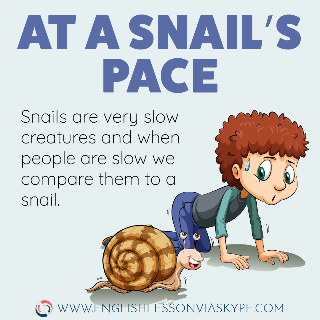 English Idioms about Speed and Progress. At snail's speed meaning. Intermediate level English vocabulary. #learnenglish #englishlessons #englishteacher #ingles #aprenderingles