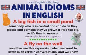 11 Animal Idioms In English